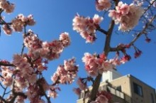 春の風邪(ふうじゃ)