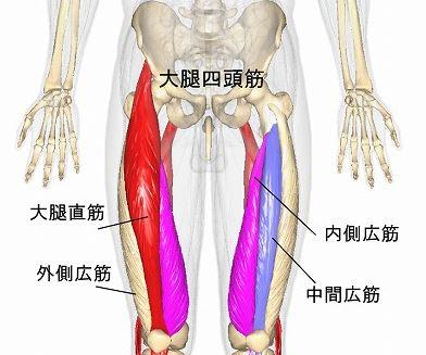 内側広筋・大腿四頭筋