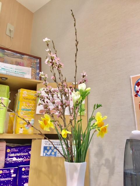桜、水仙、フリージア